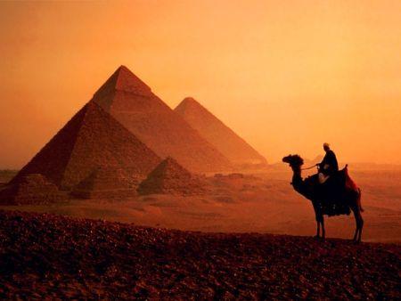 camello delante de las pirámides