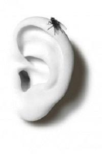 """Sabías-que-la-expresión-""""tener-la-mosca-detrás-de-la-oreja""""-no-tiene-nada-que-ver-con-el-insecto"""
