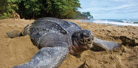 palabra-origen-curioso-tortuga