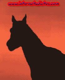 ¿El caballo mira hacia el frente o hacia el fondo?