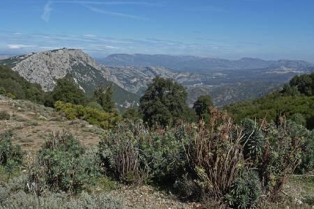 vegetacion mediterranea maquis