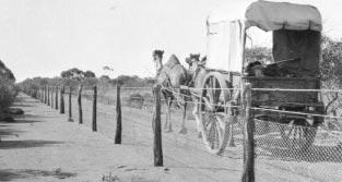 carreta con camellos valla a prueba de conejos