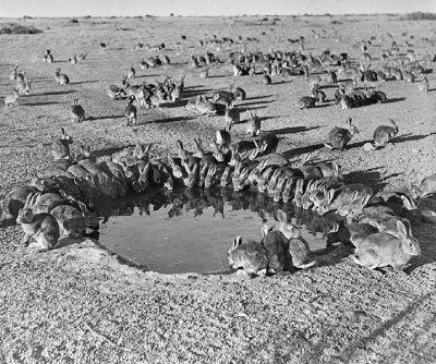 estanque conejos mixomatosis